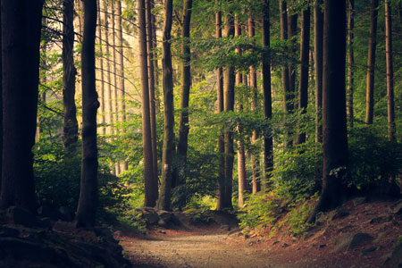WHY IS BEING IN NATURE SUCH A GOOD DE-STRESSOR?